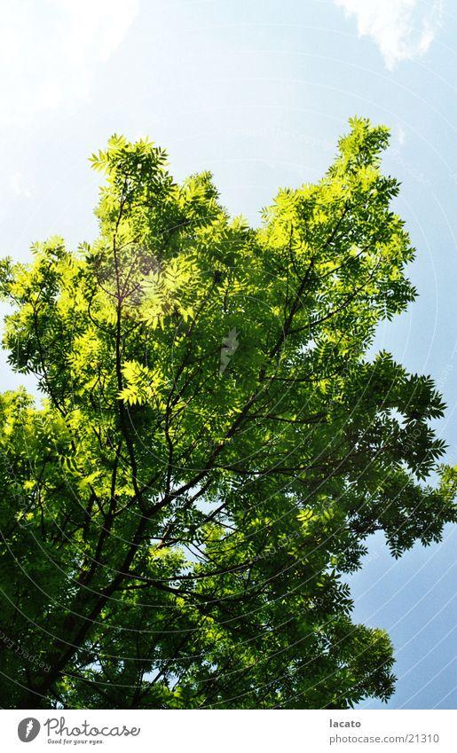 tree Tree Summer Sky Nature