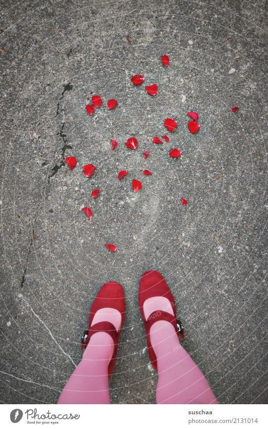Flower Red Street Emotions Feet Together Footwear Wedding Rose Asphalt Anger Relationship Argument Stockings Blossom leave Lovesickness