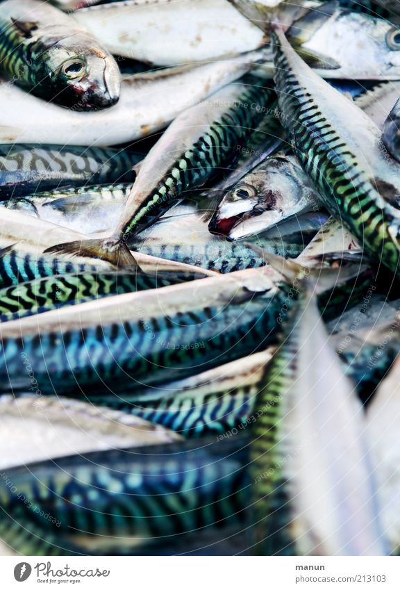 Fishy Food Seafood Nutrition Organic produce Trade Nature Animal Farm animal Dead animal Mackerel Group of animals Fresh Glittering Delicious Natural