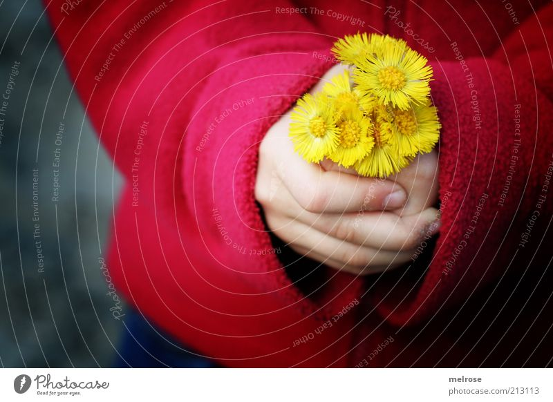 Human being Child Nature Hand Red Flower Girl Yellow Environment Emotions Gray Happy Contentment Infancy Fingers Touch