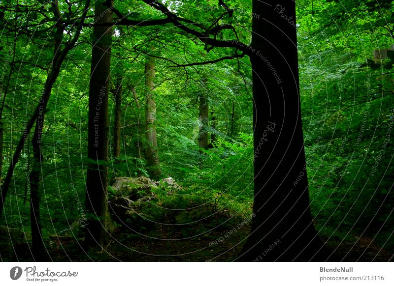 Green Hell Environment Nature Plant Earth Spring Summer Beautiful weather Tree Grass Bushes Moss Leaf Foliage plant Forest Virgin forest Hill Wood Fresh