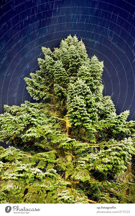 Sky Nature Tree Plant Summer Movement Stars Transience Fir tree Night sky Beautiful weather Starry sky Fir branch Cloudless sky