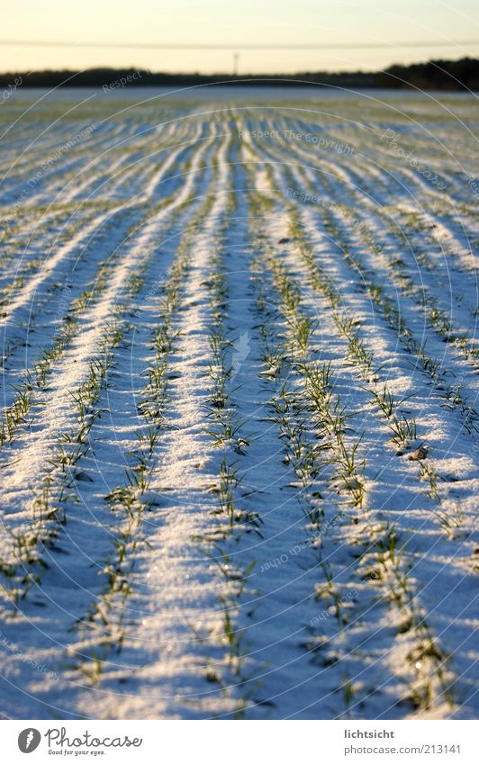 Nature Blue White Beautiful Plant Winter Environment Landscape Snow Lanes & trails Horizon Ice Earth Weather Field Climate