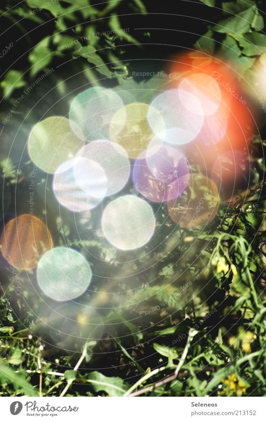 bubble bokeh Summer Environment Nature Plant Flower Grass Meadow Glittering Retro Round Multicoloured Blur Colour photo Exterior shot Day Light Shadow Contrast