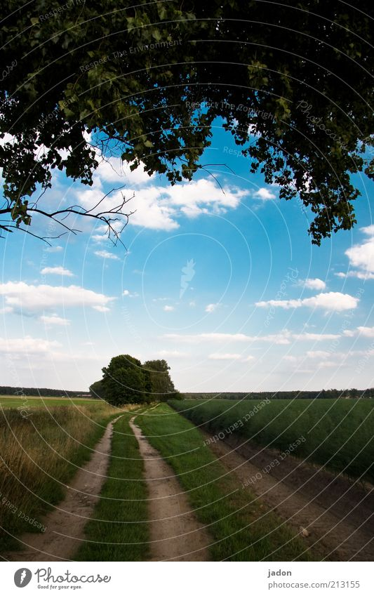Nature Sky Tree Clouds Grass Lanes & trails Landscape Field Environment Earth Infinity Long Footpath Curve Blue sky Twigs and branches