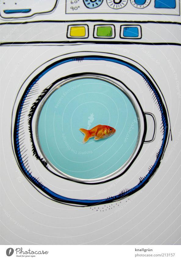 White Blue Animal Funny Fish Swimming & Bathing Illustration Creativity Whimsical Idea Bizarre Aquarium Technology Washer Drawing Survive