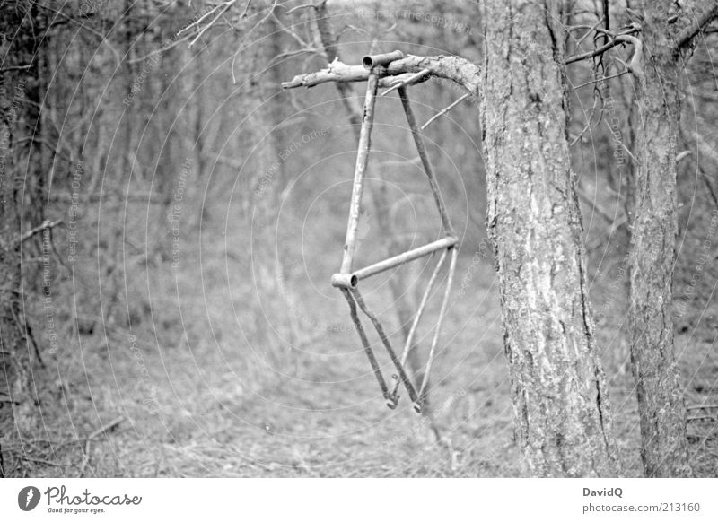 Nature Old Tree Forest Environment Change Transience Decline Whimsical Tree trunk Hang Bicycle fittings Bicycle frame Forget Dangle