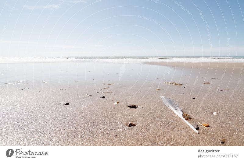 end of the world Vacation & Travel Tourism Far-off places Freedom Summer Summer vacation Beach Ocean Waves Surf Flotsam and jetsam Stone Mussel Mussel shell