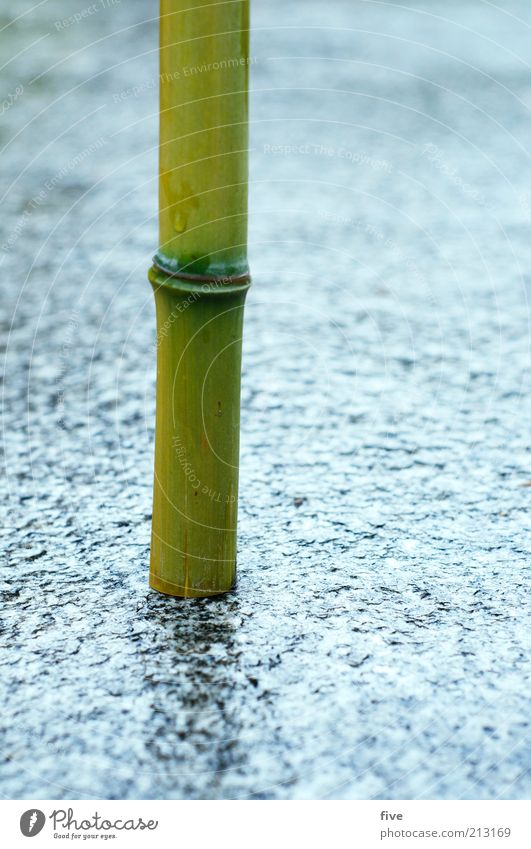 Rooted Environment Nature Water Summer Bad weather Rain Plant Wild plant Exotic Bamboo Bamboo stick Stand Growth Thin Wet Natural Round Green Ground