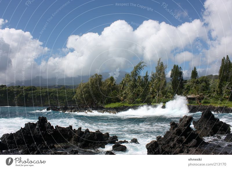 surf Environment Nature Landscape Water Sky Summer Beautiful weather Wind Tree Waves Coast Bay Ocean Pacific Ocean Island Maui Lava beach Wild Energy