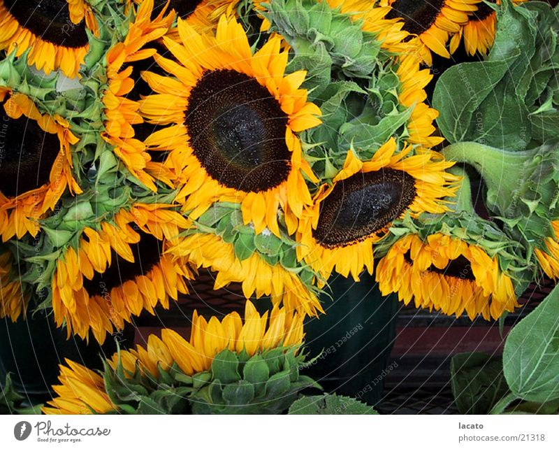 Flower Plant Yellow Bouquet Sunflower