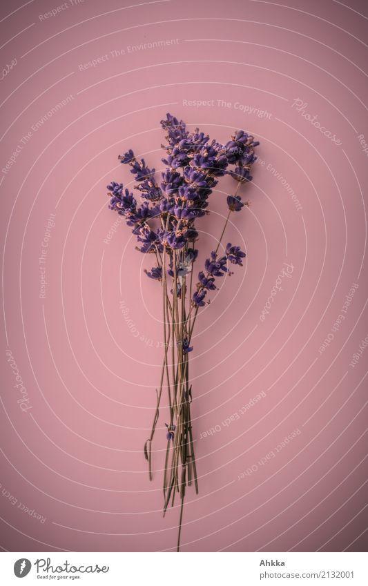 Plant Colour Beautiful Calm Love Feasts & Celebrations Pink Contentment Decoration Blossoming Joie de vivre (Vitality) Romance Violet Bouquet Kitsch Harmonious