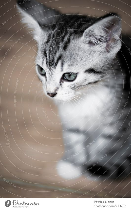 sad kitty Animal Pet Cat Animal face 1 Looking Authentic Beautiful Cute Soft Moody Love of animals Colour photo Interior shot Close-up Deserted