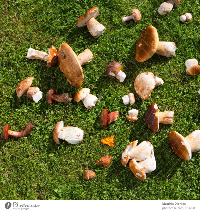 Nutrition Grass Food Esthetic Multiple Lawn Harvest Mushroom Collection Organic produce Mushroom cap Bird's-eye view Edible Vegetarian diet Distributed