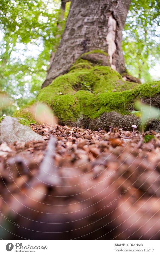 tree Environment Nature Summer Autumn Climate Climate change Beautiful weather Tree Moss Forest Esthetic Brown Gray Green Tree trunk Carpet of moss