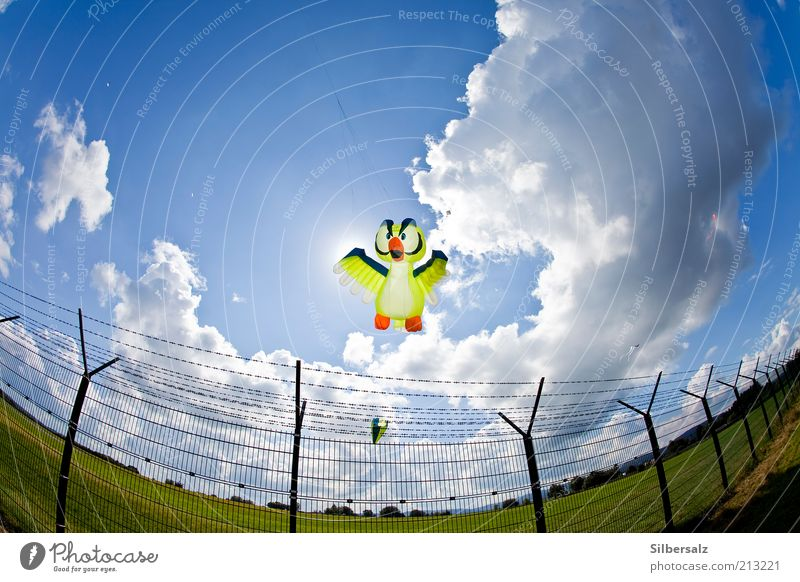 Movement Bird Flying Leisure and hobbies Wing Exceptional Beautiful weather Hover Kite Airport Wide angle Fisheye Runway Floating Airfield