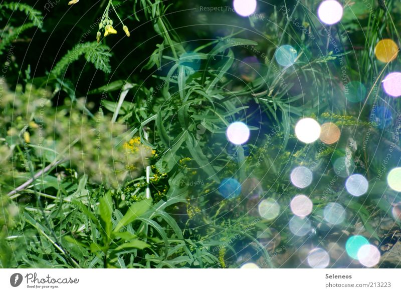 Nature Plant Summer Grass Glittering Environment Illuminate Soap bubble Visual spectacle Light Refraction Point of light Highlight Patch of colour