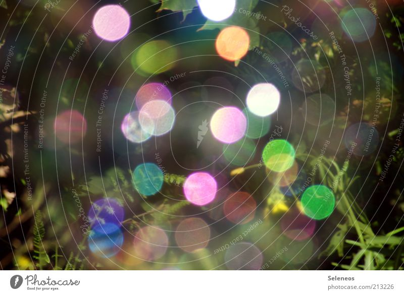 bubble bokeh V Summer Environment Nature Plant Climate Grass Soap bubble Glittering Retro Round Multicoloured Colour photo Exterior shot Day Light Shadow