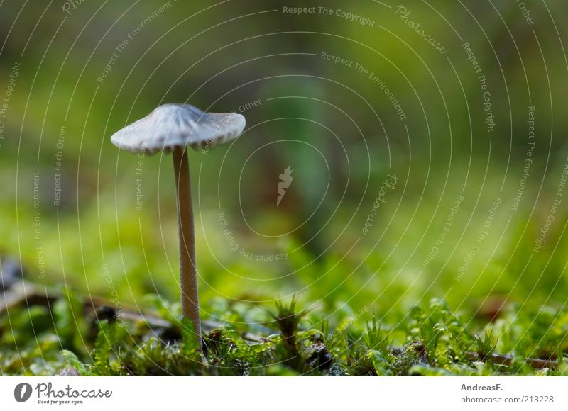 A little man stands in the forest... Environment Nature Plant Earth Autumn Grass Moss Stand Green Mushroom Mushroom cap poisonous mushroom Woodground