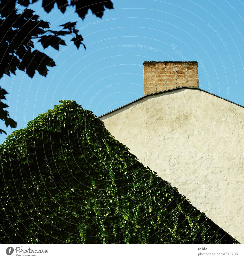 CAMOUFLAGE House (Residential Structure) Environment Nature Plant Foliage plant Wall (barrier) Wall (building) Facade Roof Chimney Old Blue Gray Green Vine
