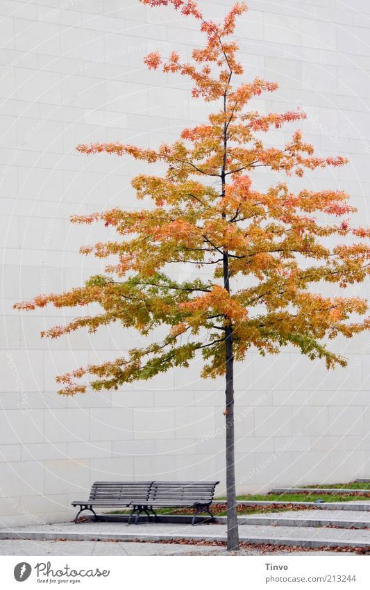 Tree Calm Leaf Autumn Wall (barrier) Park Architecture Facade Bench Seasons Manmade structures Seating Partially visible Stagnating Section of image