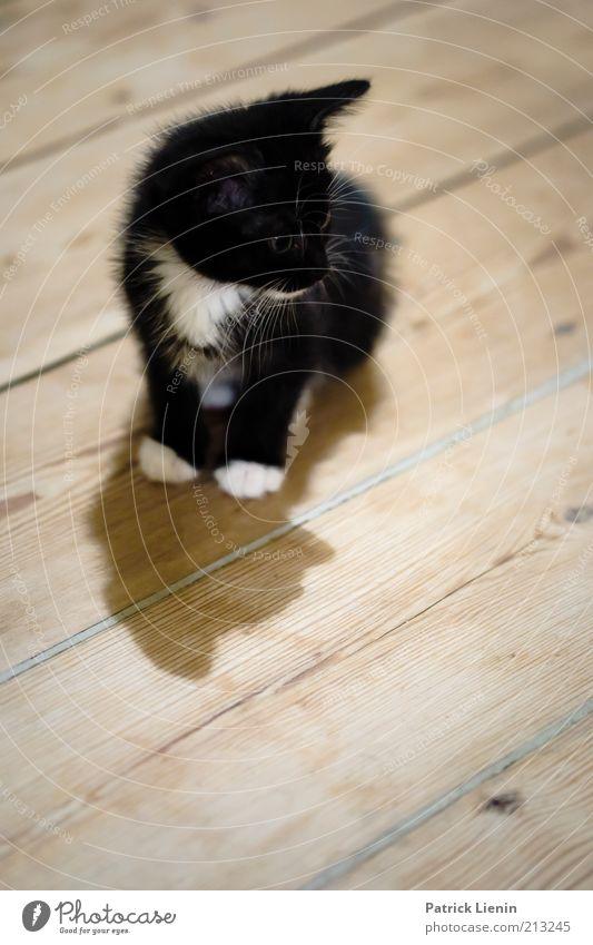 Beautiful Black Animal Cat Moody Small Soft Observe Curiosity Cute Watchfulness Paw Pet Individual Blur