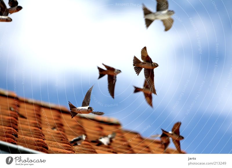 Nature Sky Clouds Freedom Air Bird Flying Beginning Group of animals Roof Wing Wild animal Beautiful weather Partially visible Section of image
