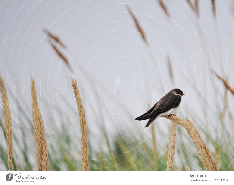 Nature Sky Plant Summer Animal Freedom Bird Weather Environment Sit Wing Wild animal Beautiful weather Individual Summer vacation Swallow