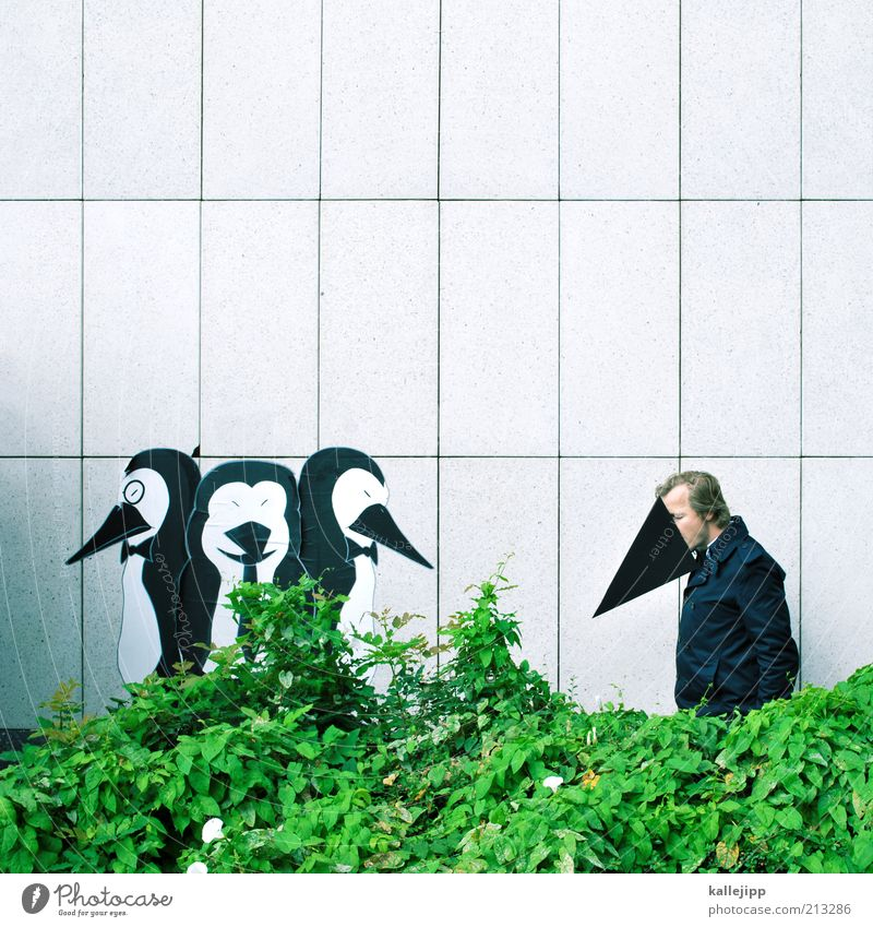 foreigners Lifestyle Human being Masculine Man Adults 1 30 - 45 years Animal Bird Group of animals Emotions Penguin Foreign Integration Hedge Wall (building)