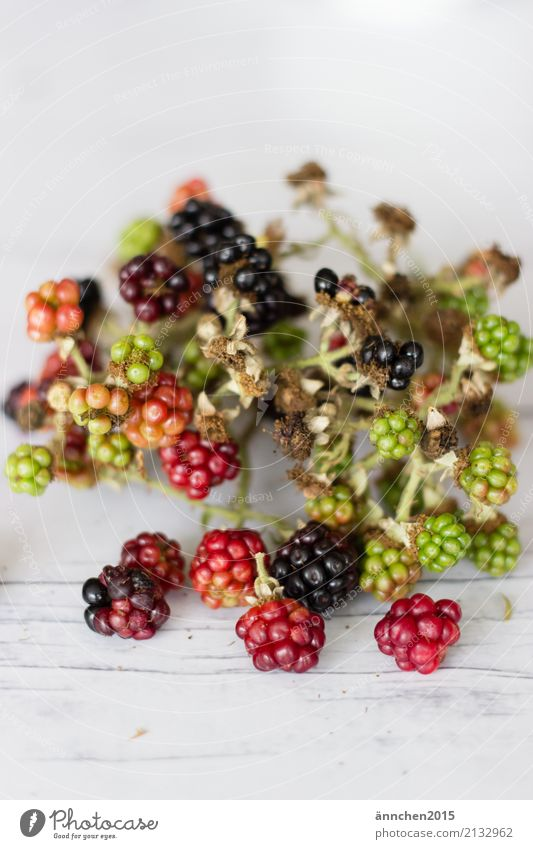 Nature Healthy Eating Green Red Dish Food photograph Fruit Mature Accumulate Blackberry