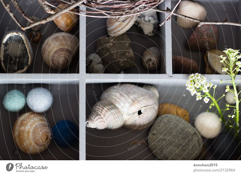 treasure chest Treasure Collection Accumulate Nature Stone Sphere Felt Tennis ball Plant Green Blue Branch Mussel Snail shell Child Infancy Childhood memory Box