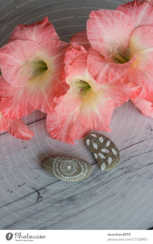 finds Gladiola Blossom Stone Painted Nature Harmonious silent meditate Bright kind Gray White Pink