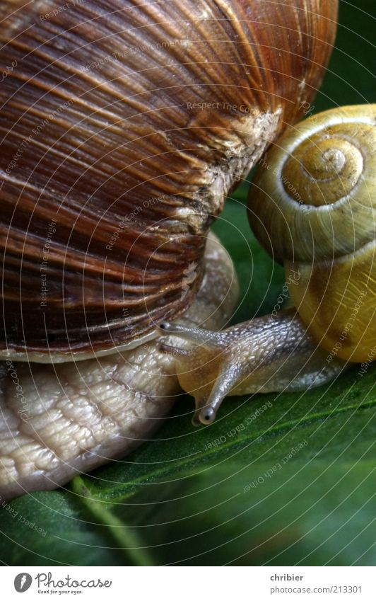Booah!! You're so big! Nature Animal Leaf Snail 2 Baby animal Wait Large Small Near Slimy Brown Yellow Green Power Protection Sympathy Friendship Together