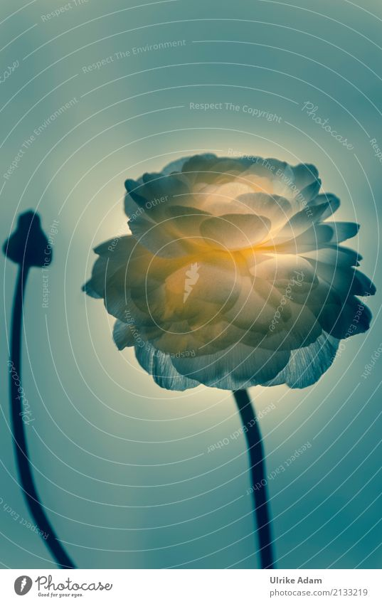 Plant Flower Blossom Spring Style Art Design Illuminate Glittering Decoration Elegant Grief Shows Harmonious Meditation Stage play