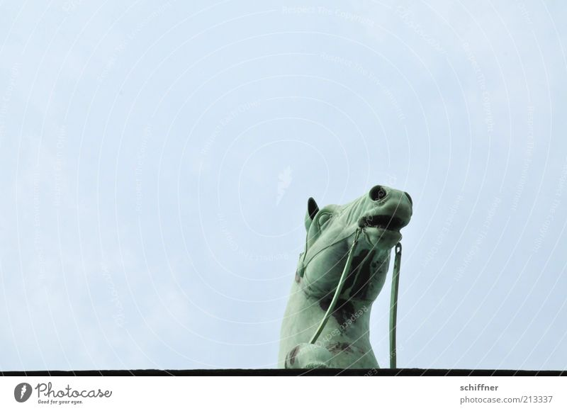 Edge of plate looker III Tourist Attraction Landmark Monument Animal Horse Esthetic Individual Horse's head Curiosity Brandenburg Gate Sky Tall Quadriga Detail