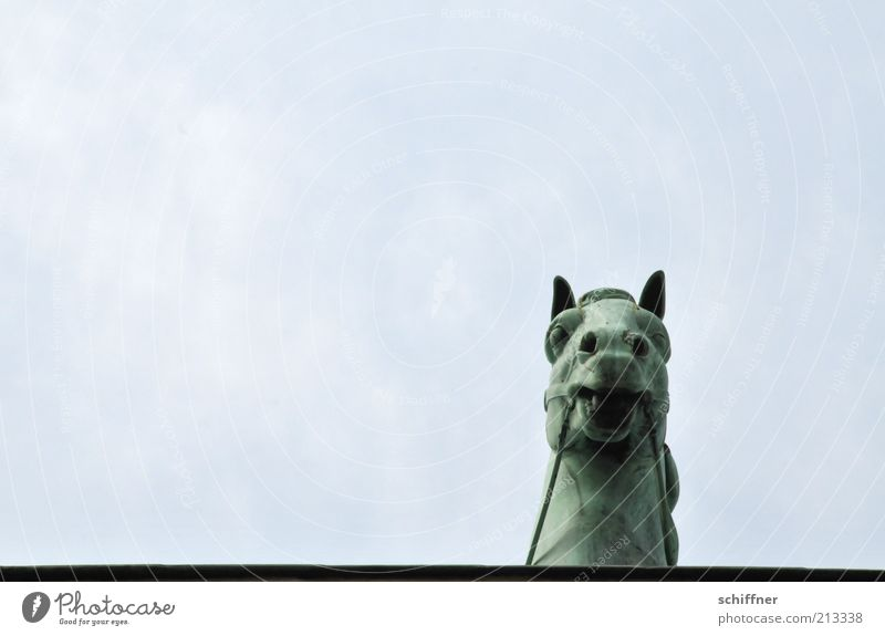 Edge of plate looker II Tourist Attraction Landmark Monument Animal Horse Esthetic Individual Horse's head Curiosity Brandenburg Gate Sky Tall Quadriga Detail