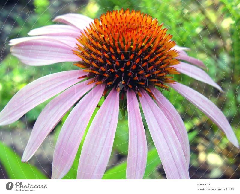 blossom Blossom Flower