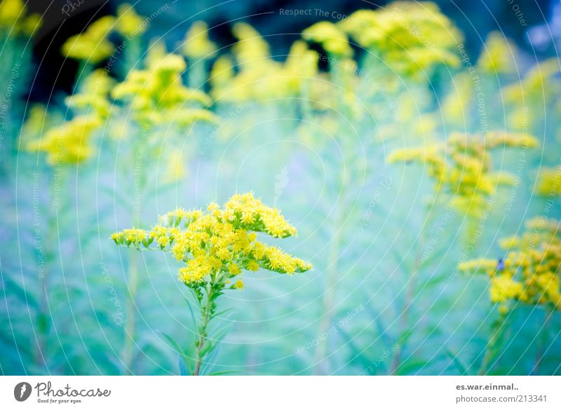 dream sequence. Environment Plant Summer Blossom Blossoming Fragrance Growth Flower Yellow Colour photo Shallow depth of field Flower meadow Meadow flower