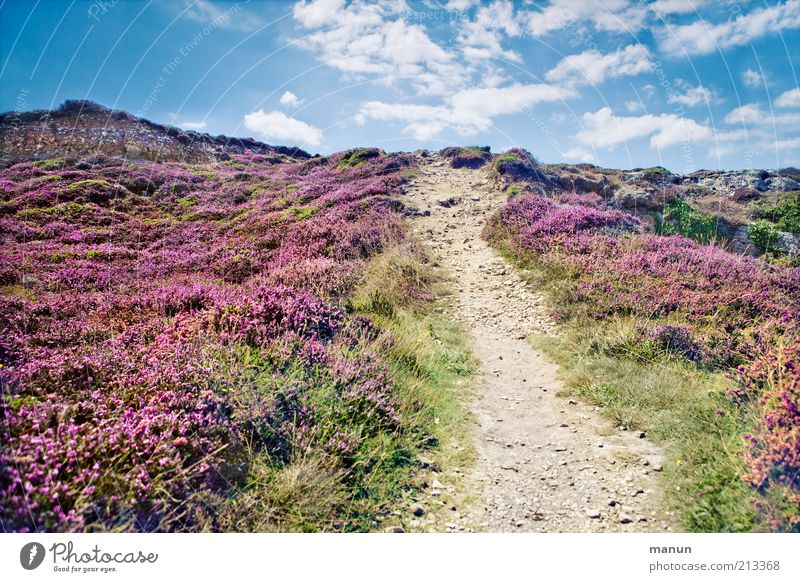Nature Plant Summer Vacation & Travel Clouds Grass Mountain Lanes & trails Sand Landscape Environment Horizon Rock Earth Perspective Bushes