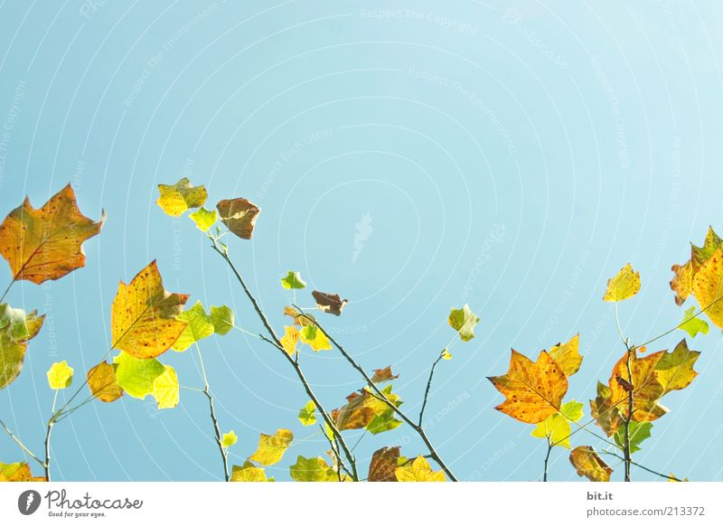Nature Sky Tree Blue Plant Calm Leaf Yellow Autumn Landscape Moody Wind Weather Environment Peace Seasons