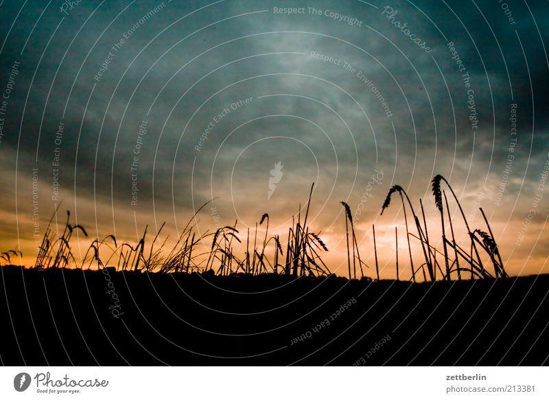 Middelhagen Vacation & Travel Nature Landscape Field Longing Wanderlust August Mecklenburg-Western Pomerania Grain Sky Clouds Low pressure zone Dusk Agriculture