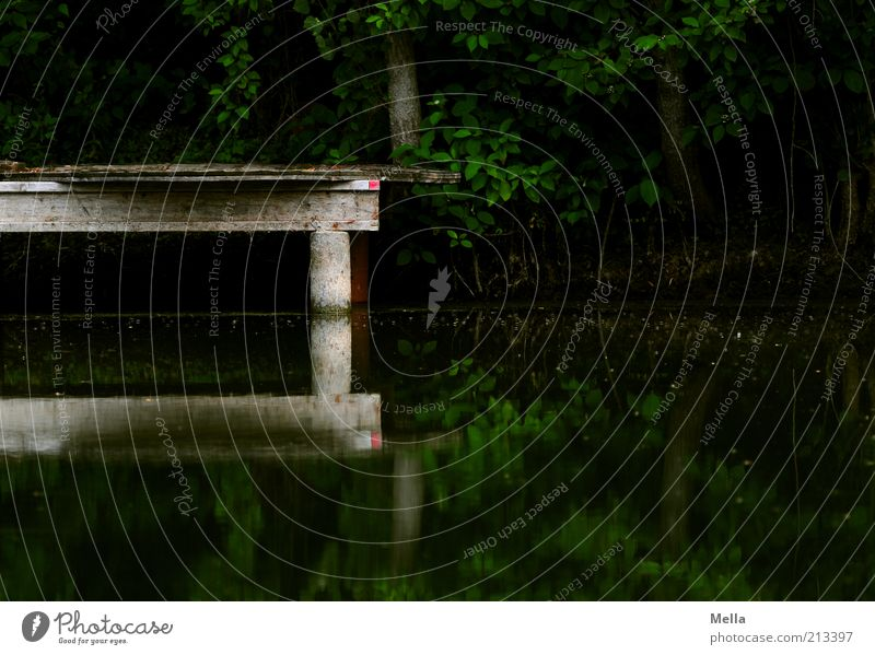 DARK Environment Nature Landscape Water Lakeside Pond Footbridge Wood Dark Sharp-edged Moody Mysterious Calm Section of image Water reflection Surface of water