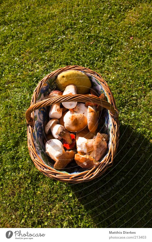 Nature Environment Food Fresh Nutrition Esthetic Healthy Eating Lawn Vegetable Harvest Collection Mushroom Basket Vegetarian diet Food photograph Product
