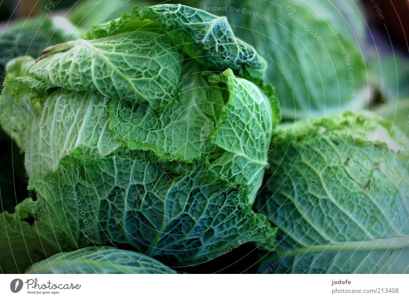 savoy cabbage Food Vegetable Green Savoy cabbage Cabbage Vegetarian diet Verdant Multiple Colour photo Multicoloured Exterior shot Deserted Day Light Shadow