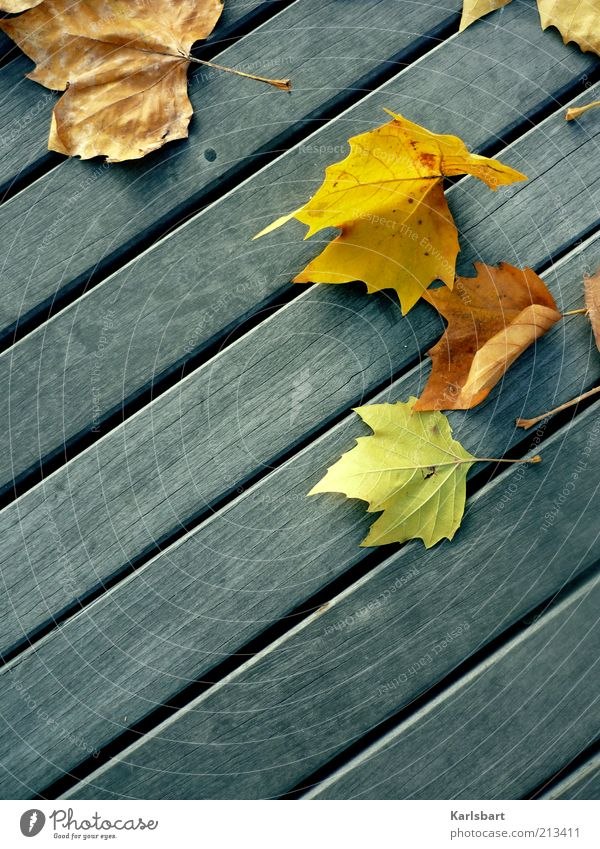 Nature Leaf Colour Autumn Line Environment Ground Change Bird's-eye view Transience Decline Wooden board Partially visible Section of image Wooden floor