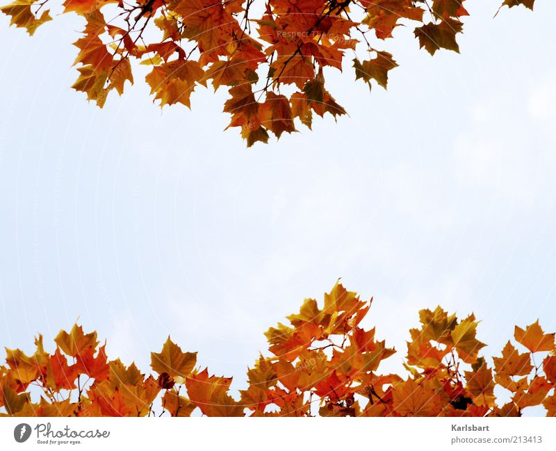 Sky Nature Colour Tree Relaxation Leaf Joy Environment Autumn Style Healthy Lifestyle Freedom Idyll Change Harmonious