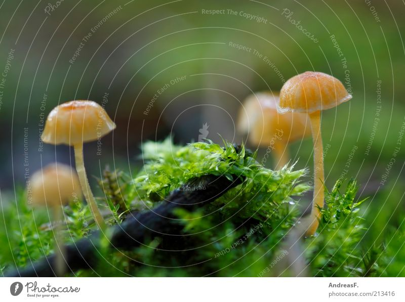 midgets Nature Plant Earth Autumn Yellow Green Environmental protection Mushroom Moss Carpet of moss Woodground Diminutive Small Colour photo Exterior shot