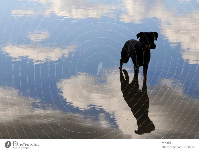On the dog come Nature Air Sky Clouds Lake Animal Dog Wait Beautiful Watchfulness Calm Colour photo Exterior shot Evening Reflection Animal portrait Full-length