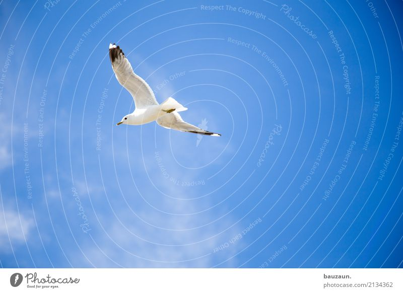 flying gull. Athletic Fitness Vacation & Travel Adventure Far-off places Freedom Summer Sun Environment Nature Sky Clouds Beautiful weather Animal Bird Seagull