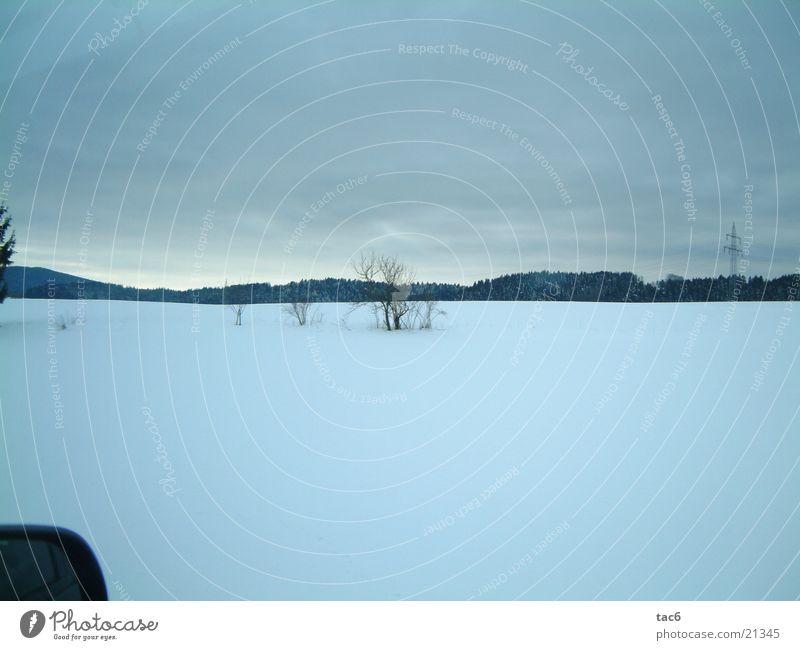Winter Forest Cold Snow Landscape Bushes Plain